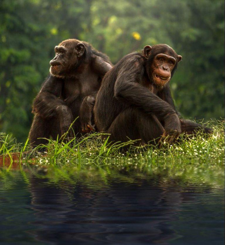 5 romantiškiausi gyvūnai pasaulyje