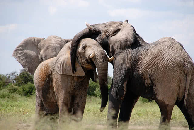5 protingiausi gyvūnai pasaulyje