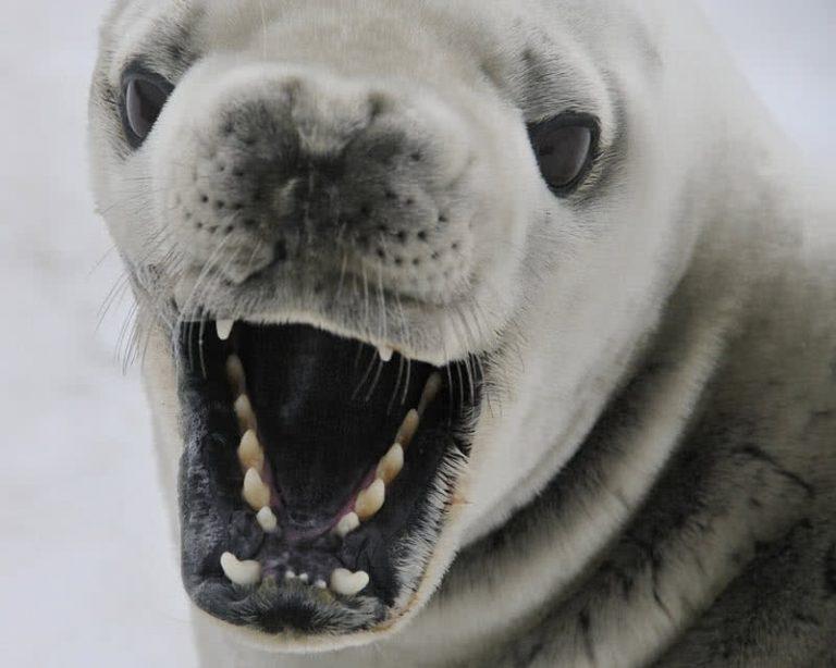 5 įspūdingiausi Antarktidos gyvūnai
