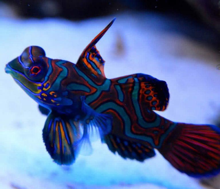 5 spalvingiausi gyvūnai pasaulyje