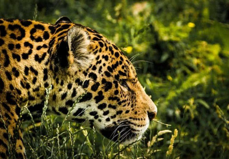 5 nuostabiausios laukinės gamtos vietos pasaulyje