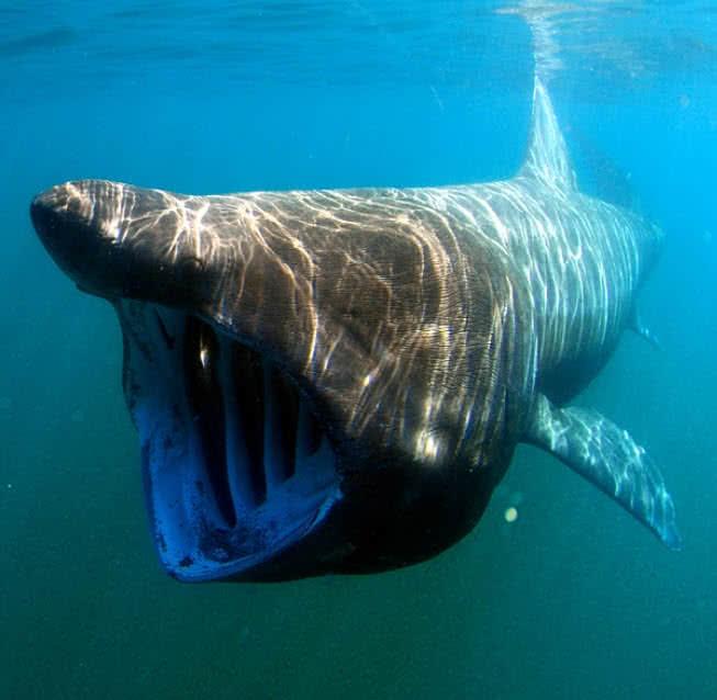 5 baisiausiai atrodantys bet nekenksmingi gyvūnai pasaulyje