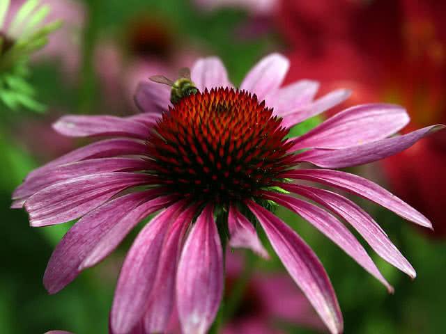 5 sveikiausi ir natūraliausi vaistiniai augalai