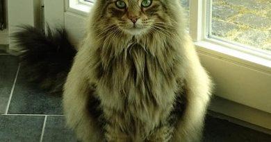 5 gyvūnai, kurie turi gražiausius plaukus