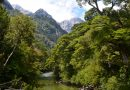 5 didžiausi miškai pasaulyje