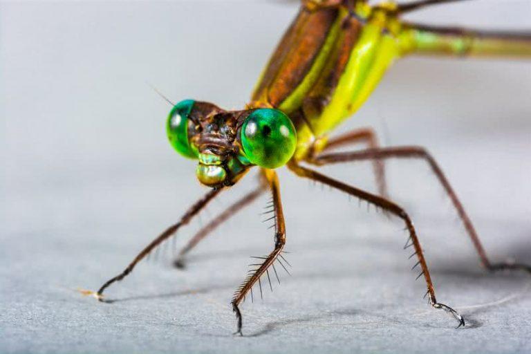5 nuostabiausios gyvūnų karalystės akys