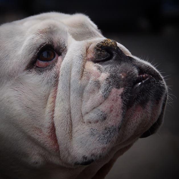 5 įdomūs faktai apie šunis