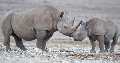 5 praėjusiame dešimtmetyje išnykę gyvūnai