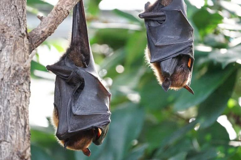 5 gyvūnai turintys neįtikėtina klausą