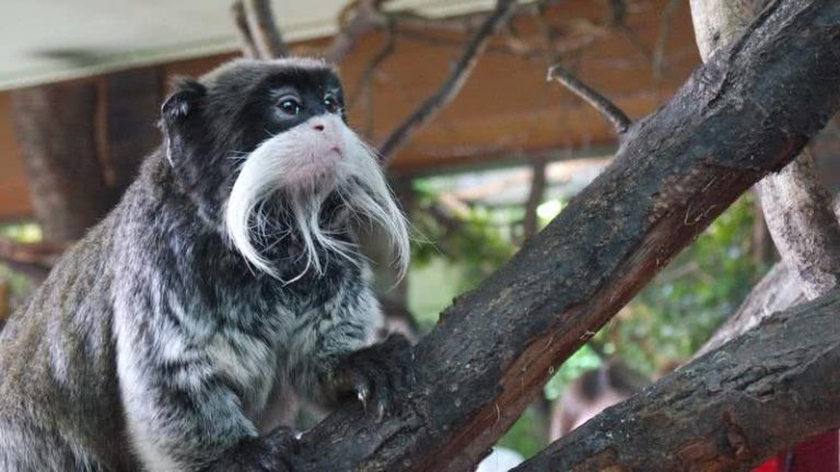 5 gražiausios gyvūnų barzdos