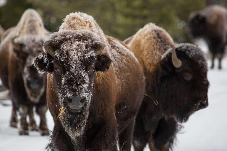 5 nuostabūs gyvūnai, randami tik Šiaurės Amerikoje