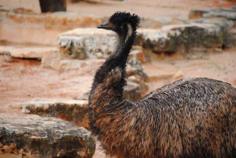 5 nuostabiausi Australijos gyvūnai