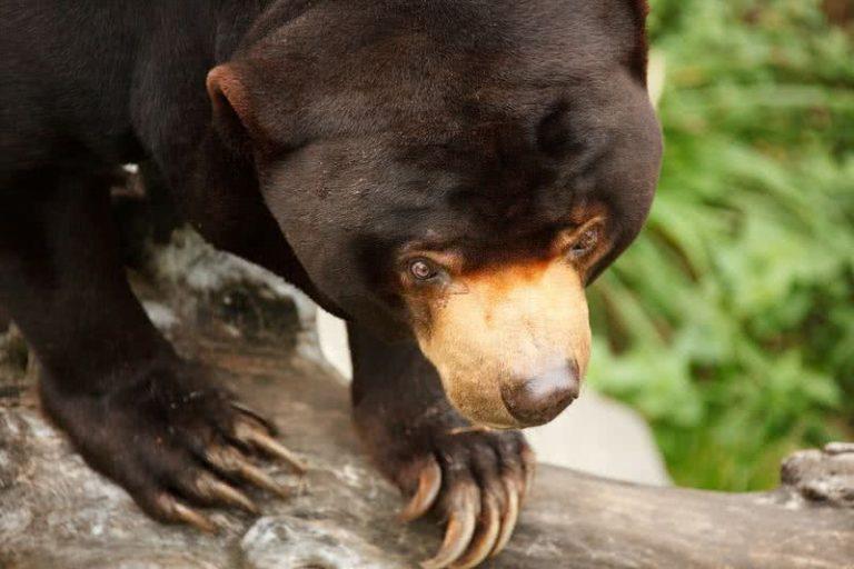 5 agresyviausi gyvūnai pasaulyje