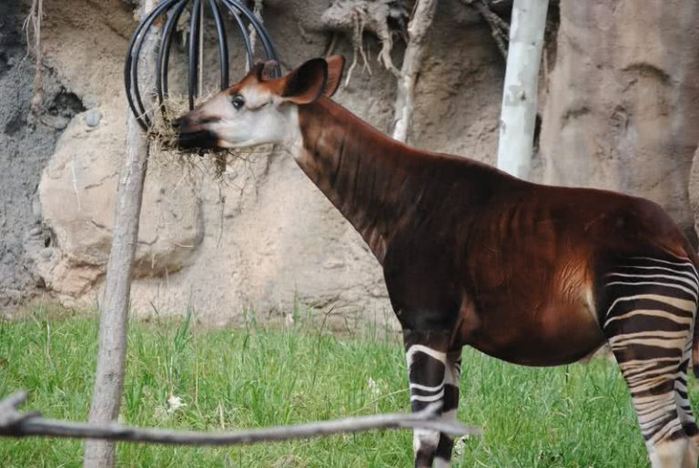 5 neįtikėtini gyvūnai, apie kuriuos tikriausiai net nesate girdėję
