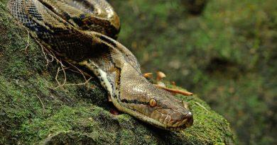5 didžiausios gyvatės pasaulyje